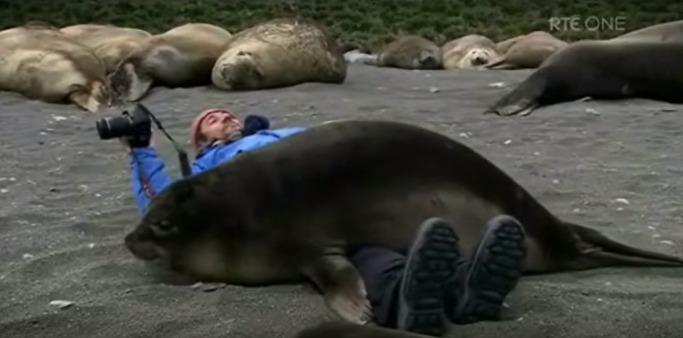 фотограф и тюлени подружились, очень