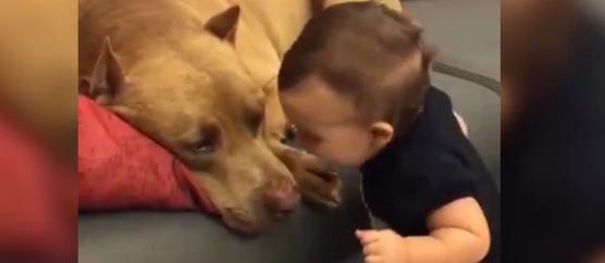 ребенок поцеловал собаку
