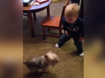 Как мама научила сидеть ребенка а не собачку