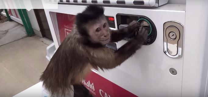 обезьяна вкинула монетку и бэт автомат с напитками